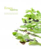 Fresh green rocket salad leaves, eruca sativa, rucola or arugula — ストック写真