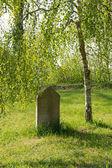 Old tombstone under a birch — Zdjęcie stockowe