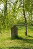 Old tombstone under a birch — Stock Photo