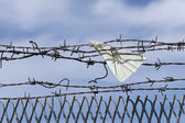 Paper plane gets stuck in barbed wire — Stock Photo
