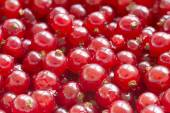 Red currants as background — Stock Photo