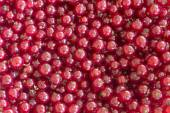 Red currants without stems as a background — Stock Photo