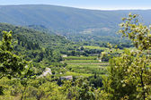 Landscape in South Europe with an old winery, vineyards, fields — Stock Photo