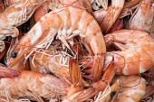 Background from shrimps — Stock Photo
