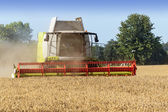 Combine harvester on a golden wheat field — Stock Photo