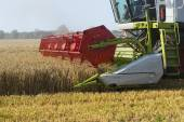 Part of a combine harvester working on a wheat field — Stock Photo