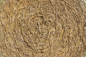 Background texture, round straw bale — Stock Photo