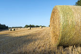 Straw bales after harvest on a field — Stock Photo