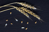 Wheat ears and seed on dark  wood — Stock Photo
