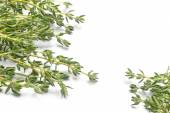 Fresh green thyme, Thymus vulgaris, in two corners isolated on a — Stock Photo