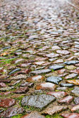 Wet cobblestones on a medieval street, vertical background textu — Stock Photo