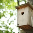 Bird house hanging from the tree with the entrance hole in the shape of a circle. — Stock Photo #53981621