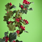 European Holly (Ilex aquifolium) leaves and fruit — Stock Photo #54363483