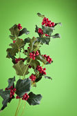 European Holly (Ilex aquifolium) leaves and fruit — Stock Photo