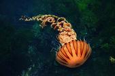 Jellyfish — Stock Photo