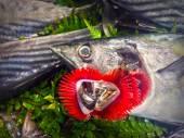 Fresh fish on ice on the market — Stock Photo