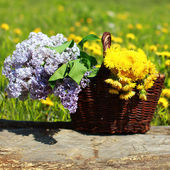 Summer basket with yellow dandelions and lilacs on meadow — Stock Photo