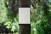 環境、性質の概念を - フォレスト、ツリー上の空白板 — ストック写真