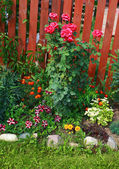 Garden flowers, flowerbed — Stock Photo