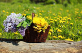 Sunny summer background basket with yellow dandelions and lilacs — Stock Photo