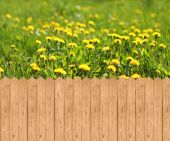 Wooden fence  and meadow with dandelions — Foto Stock