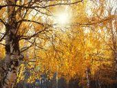 Autumn dense forest, branchy trees, landscape background — Stock Photo