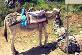 Donkey worth waiting tied to a post on a hot day — Stock Photo