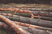 Environment, nature and deforestation forest concept - felling o — Stock Photo