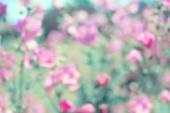 Soft vintage blurred floral background, spring pink flowers defo — Stock Photo
