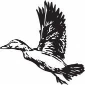 Pintail Duck — Stock Vector
