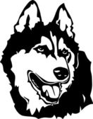 Alaskan malamute — Stok Vektör