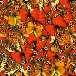 Butterflies Seamless Texture Tile — Stock Photo #53725557