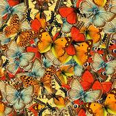 Butterflies Seamless Texture Tile — ストック写真