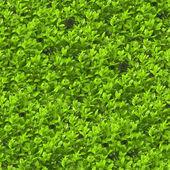 Foliage Seamless Texture Tile — ストック写真