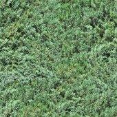 Evergreens Seamless Texture Tile — ストック写真