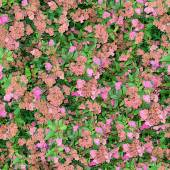 Flowers Seamless Texture Tile — Photo