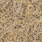 Dry Grass Seamless Texture Tile — Foto Stock