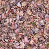Ground Cover Seamless Texture Tile — Stockfoto