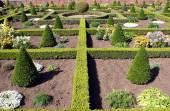 Topiary. garden art or garden design — Stock Photo