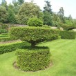 Topiary. yew topiary. topiary trees — Stock Photo #55242039