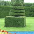Topiary tree in the shape of a peacock. yew topiary. topiary — Stock Photo #55242369