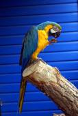Parrot in an aviary — Stock Photo