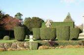 Garden. yew topiary. sculptured urn — Stock Photo