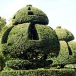 Yew topiary. topiary trees — Stock Photo #58589245