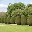 Garden. park. path. pathway. topiary. yew topiary. topiary trees. bushes — Stock Photo #58594277