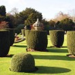 Topiary trees. yew topiary. garden. park — Stock Photo #60181787