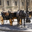 Horse carriages, Seville, Andalusia, Spain — Stock Photo #61238453