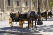 Horse carriages, Seville, Andalusia, Spain — Foto Stock