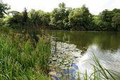 Avon Nehri, Woodstock, Oxfordshire, İngiltere — Stok fotoğraf