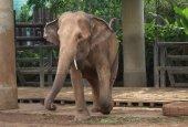 Elephant, Dusit zoo, Bangkok, Thailand, Asia — Foto Stock